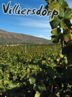 Vinyard near Villiersdorp, South AFrica